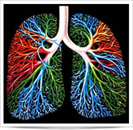 """Featured image for """"How Our Lungs Work"""""""